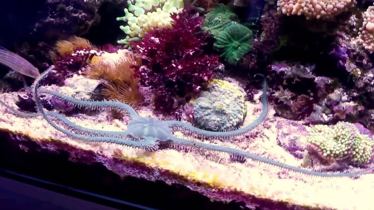 riff aquarium raumteiler