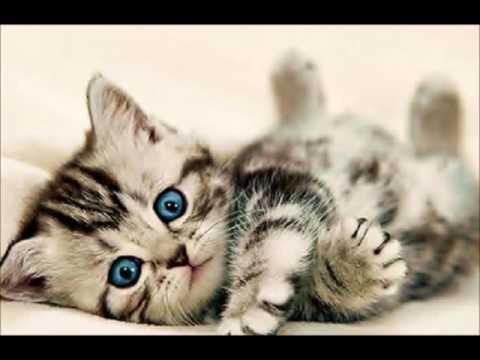 Девушки кошки из аниме