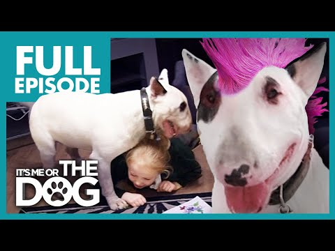 The Punk Pup: Chaos | Full Episode |  It's Me or The Dog