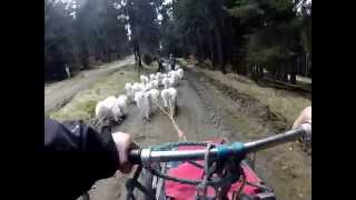 Tour With Samoyed, Greenlanddog, Alaskan Malamute, Siberian Husky Part 1