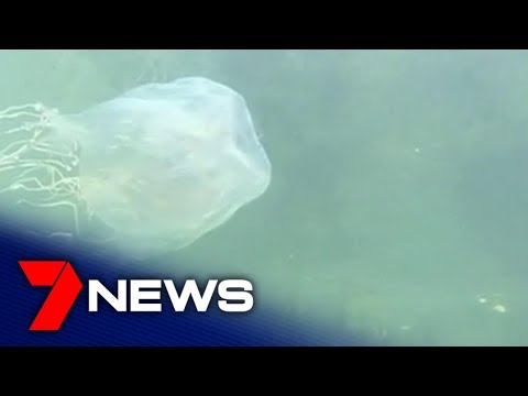 Scientists Discover Antidote To Treat Australian Box Jellyfish Stings  | 7NEWS