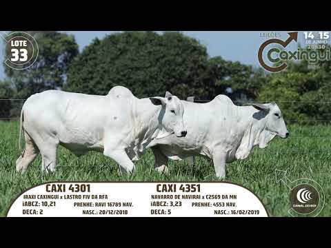 LOTE 33   CAXI 4301, CAXI 4351