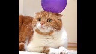 HILARIOUSLY FUNNY Animals React to Balloon Tune - #BalloonTuneChallenge