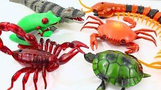 Super Creepy Fun Kids Animals Toys Collection - R/C Snake Alligator Frog Crab Scorpion Turtle Roach