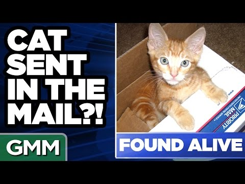 8 Weirdest Things Sent By Mail