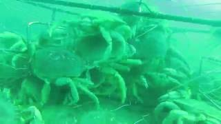 Timelapse of Crab Pot