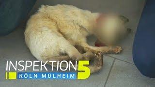 Katze tot: Schlafwandler mit blutigen Händen irrt vor der Wache herum! | Inspektion 5 | SAT.1 TV