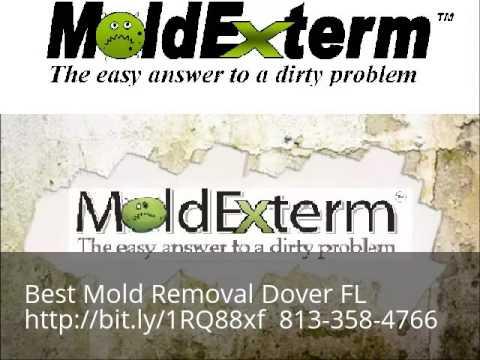 Expert Mold Remediation Dover FL 813-358-4766
