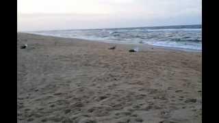 Video 2012 08 22 18 59 26