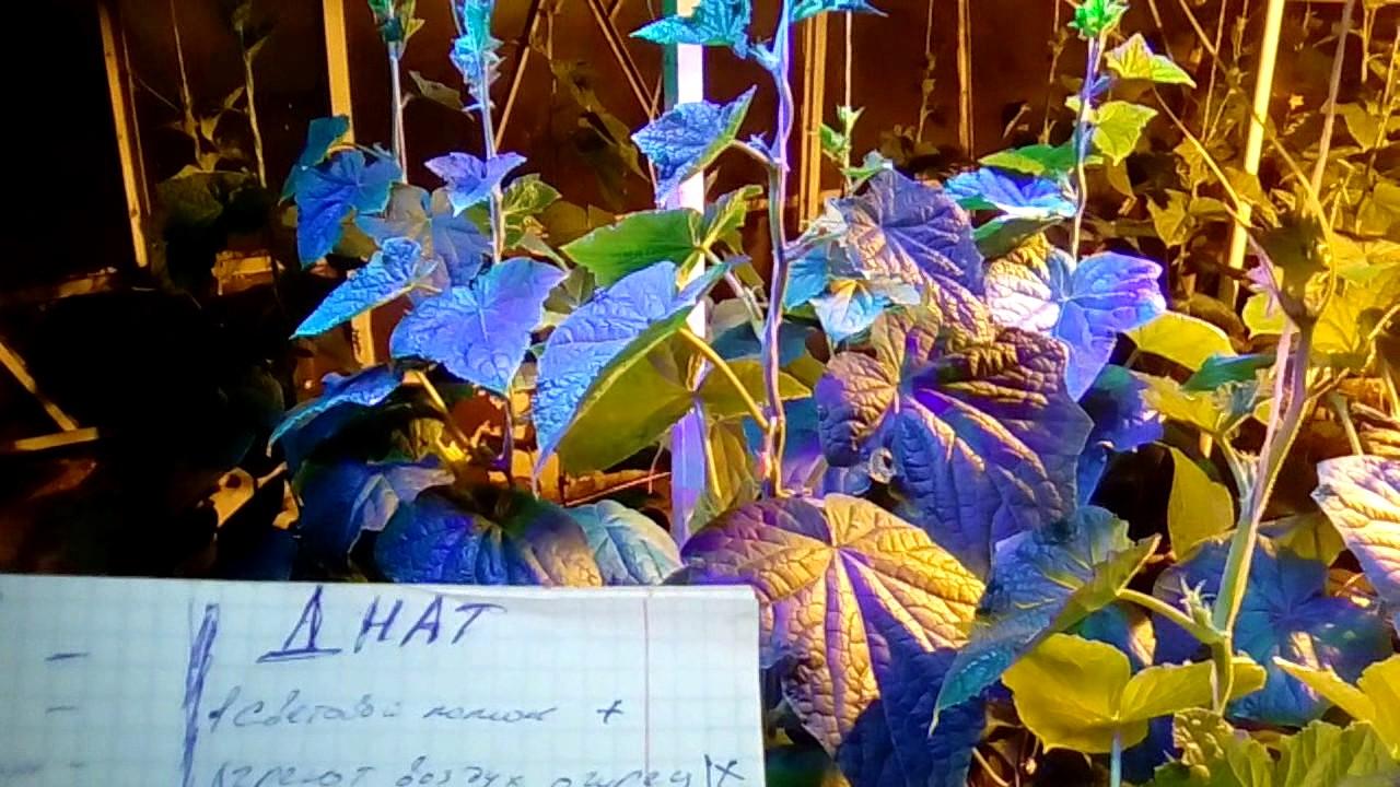 №12 Как выбрать лампу для растений. Часть 2 - YouTube