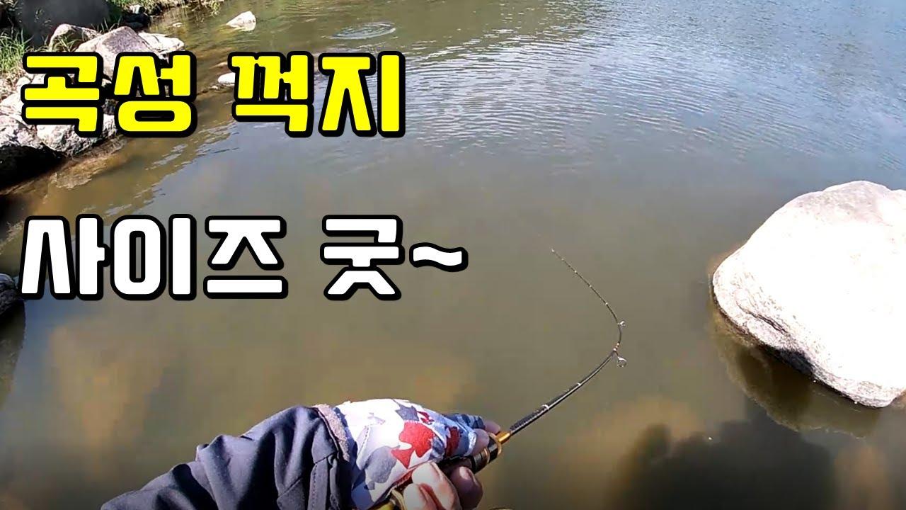 곡성 꺽지낚시, 쏘가리 꽝~!, 역주행에 만난 사이즈 좋은 꺽지들^^