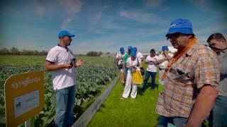 Овощная усадьба 2015 / Капуста