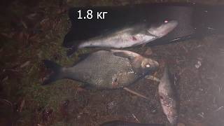 Подводная охота в корчах осень 2019