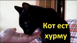 #Кот ест хурму.