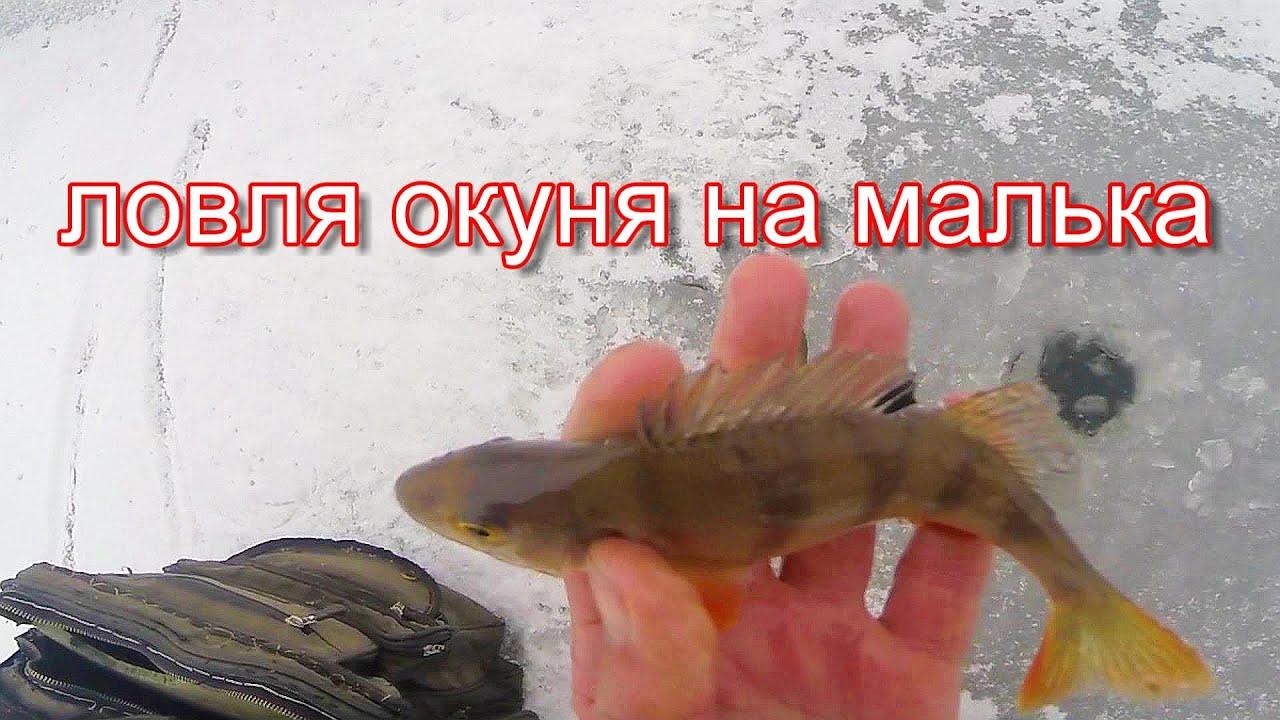 Ловля окуня зимой на малька, видео rybachil.ru
