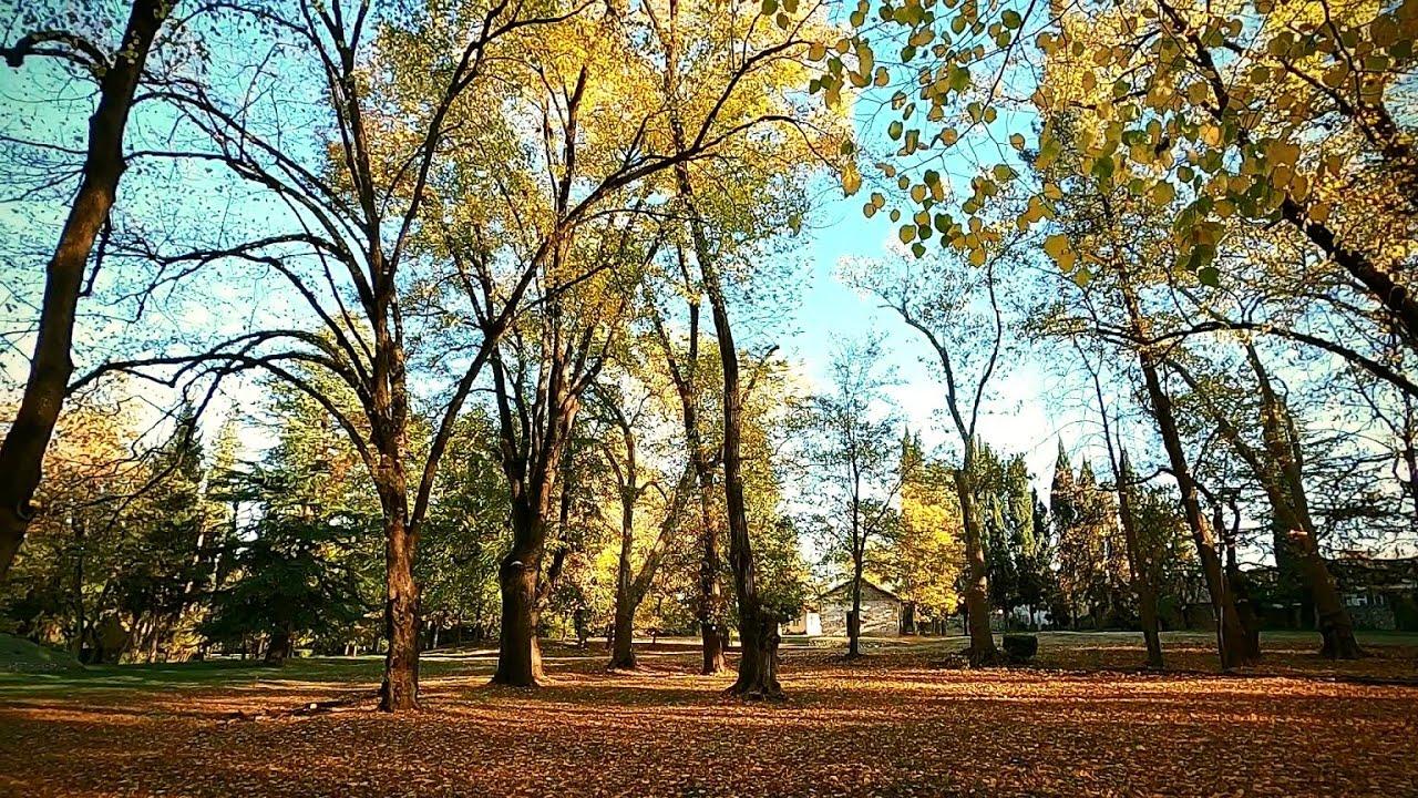 #25. Tsinandali Park – #25. წინანდლის პარკი