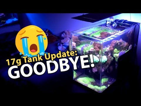 LAST VIDEO of Dropoff Tank... (17g - 5/6/2018)