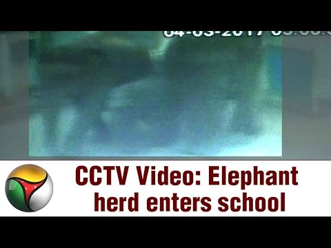 CCTV Video: Elephant herd enters school in Coimbatore
