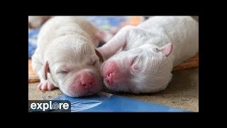 ECAD Puppies - Daisy and Gipper's Litter