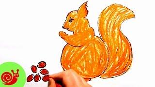 Рисуем белочку развивающий детский видео урок для малышей