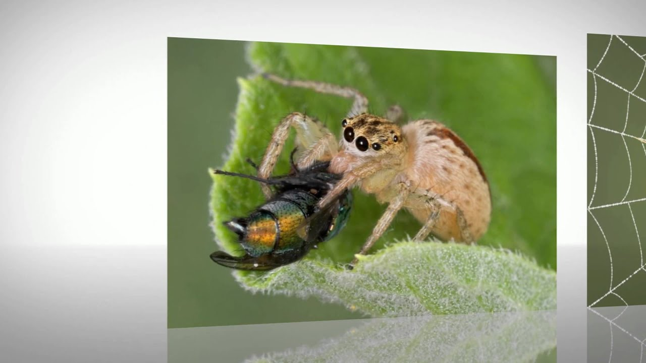 all about spiders for children youtube