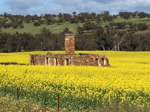 Fields Of Yellow - Western Australian Canola