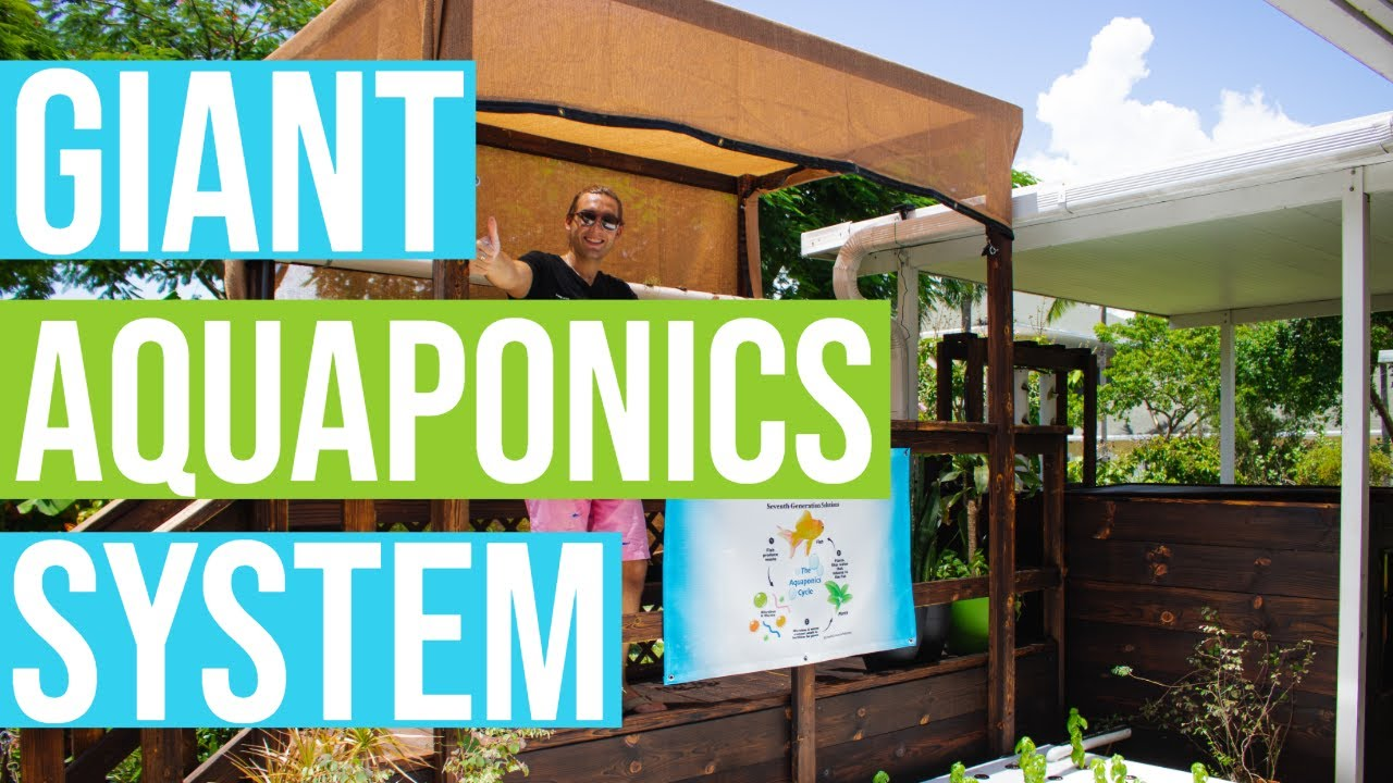 AQUAPONICS INSTALLED AT SCHOOL