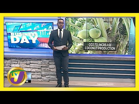 Jamaican Gov't to Increase Coconut Production   TVJ Business Day - May 14 2021