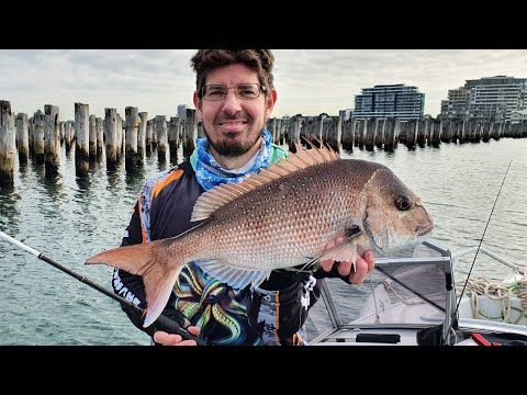 Melbourne Snapper Fishing | Princess Pier Port Melbourne