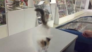 Котёнка в добрые руки Челябинск