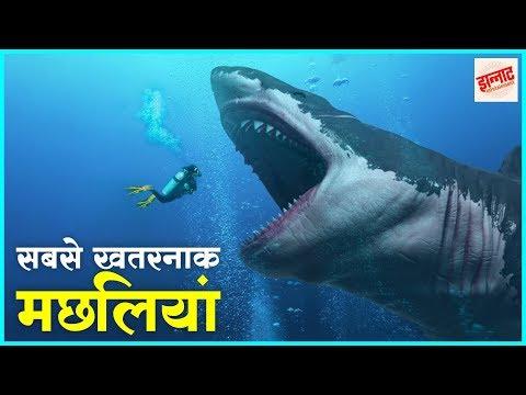 दुनिया की सबसे जानलेवा मछलियां | Most dangerous fishes in th