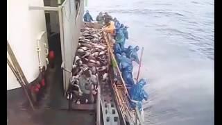Cara mancing ikan tuna di laut lepas