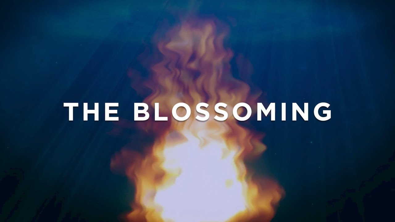 The Blossoming  Film Series Opener