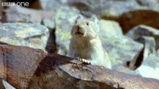funny talking animals walk on the wild side episode one preview bbc one