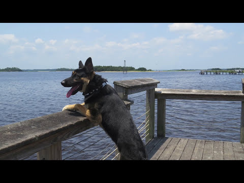 Wilmington Dog Trainers: Advanced Command Touch: Off Leash K9 Training