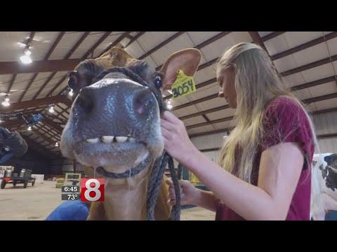 Cruisin' Connecticut – Family Fun at the 98th Annual Durham Fair