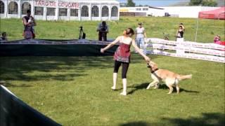 K9 Dancers Dog Dancing Competition: Szép Bernadette & Vanda