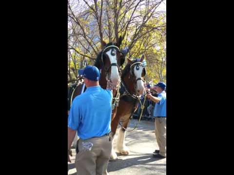 Kansas City Royals World Series Parade 2015