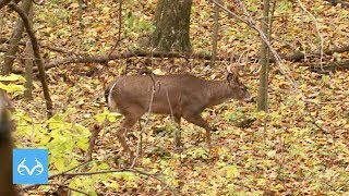 Gambar cover 12:00 PM Buck | David Blanton Hunts Illinois | Monster Bucks Monday Presented by Midway USA