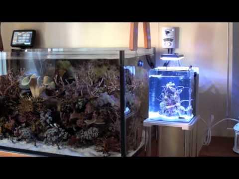 Acquario marino 350 litri lucignolo72 doovi for Acquario marino