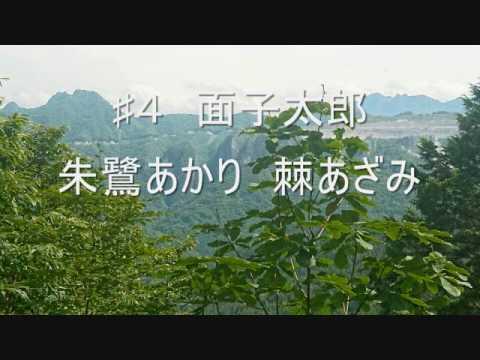 朱鷺あかり 「棘あざみ」 ♯3 ♯4 二連 カバー 面子太郎