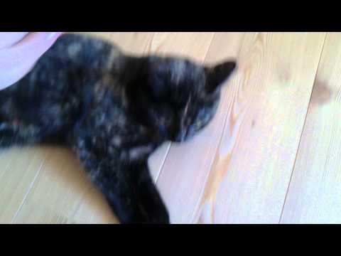 Sprechende Katzen Und Katzenjammer Katzentube