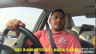 Mangrove Crab or Mud Crab Culture at Sri Ramatulasi Aqua Farms - Pond Visit