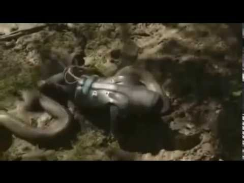[DISCOVERY TV] Moment Paul Rosolie is 'eaten alive' by a snake in LIVE TV  stunt || VIDEO