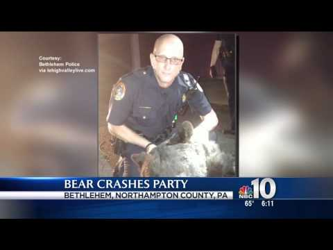 Black bear crashes college party in Pennsylvania