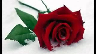 Lo How a Rose E