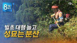 벌초 대행 늘어 200920 [TBC-띠비띠]