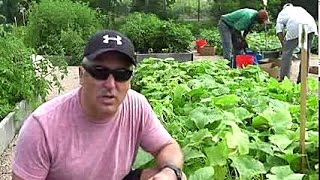 Grow Healthy Cucumbers & Prevent Yellowing