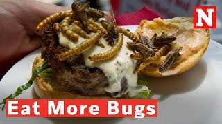 Why You Should Eat Insects