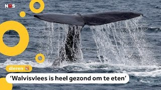 Na 31 jaar jaagt Japan weer op walvissen om op te eten